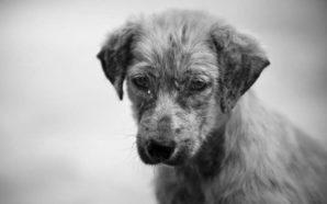 Día Internacional de los Derechos de los Animales: cómo cuidarlos…