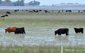 Por las inundaciones, proyectan pérdidas millonarias