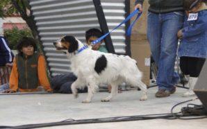 Llega el 10° Desfile de Mascotas en Monte Cristo