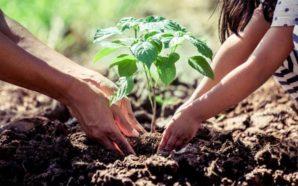 Sumate a la campaña de reforestación en Villa Santa Rosa:…