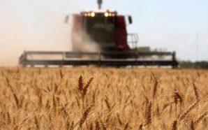 Córdoba: se palpita «TrigAR», el primer congreso internacional de trigo