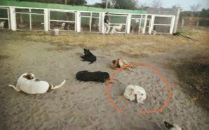 Empalaron un perro en Río Primero: piden colaboración para proteger…