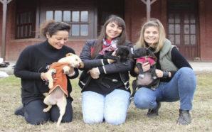Gran bingo solidario en Villa Santa Rosa organizado por Huellitas…