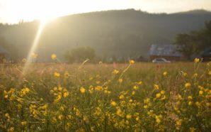 21 de septiembre: ¡llegó la primavera!