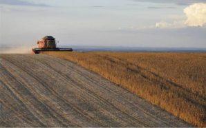 Productores de Río Primero califican como buena la cosecha de…