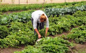 Villa Santa Rosa: Llega el cuarto capítulo de Huerta en…