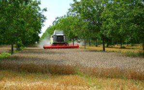 El INTA dictará un curso virtual sobre agroecología
