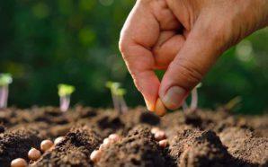 La Puerta implementa la modalidad eco-vueltos: semillas en vez de…