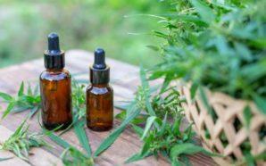 Qué beneficios tiene el cannabis para tratar la epilepsia