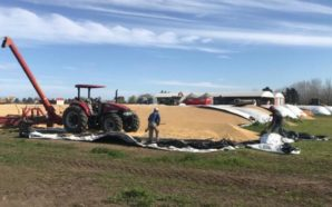 «Vandalismo Rural»: el proyecto de ley que busca penar los…