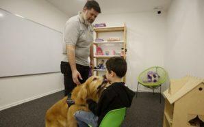 Presentan a Brownie, un perro de acompañamiento para niños en…