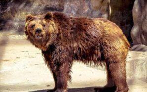 Pese a que ya es municipal, denuncian que el Zoo…