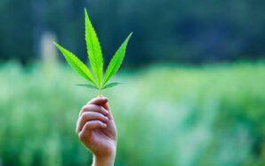 Mendoza es la primera provincia en reglamentar el cultivo de…