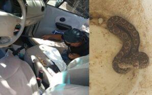 Córdoba: encontró una lampalagua en sus pies mientras manejaba